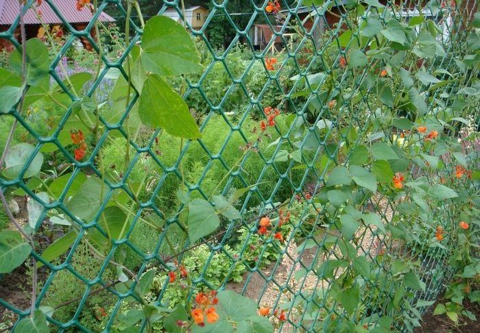 Вьющиеся растения на сетке