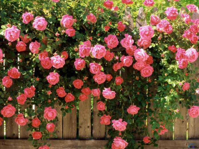 Изгородь с цветами