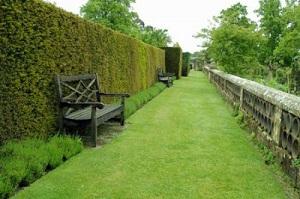Живая ограда