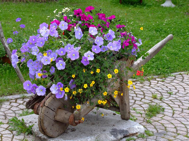 Клумбы с цветами на даче своими руками фото